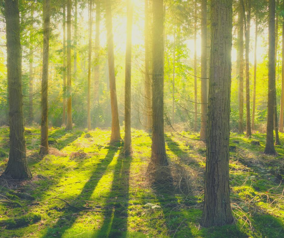 Tu Bishvat – Judaism's New Year for Nature